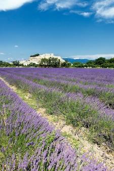 Grignan stad met lavendelveld in de zomer