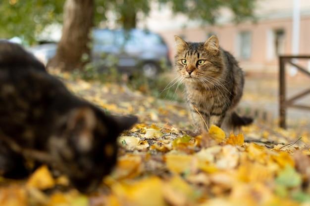 Grijs gestreepte dakloze hongerige kat kijkt naar emotionele scènes van de tegenstander