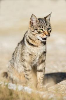 Grijs gestreepte kat met gele ogen, zittend op groen gras