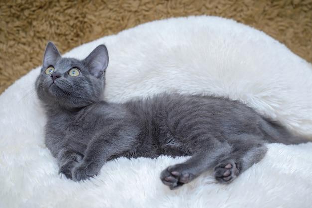 Grijs katje dat op een witte deken ligt