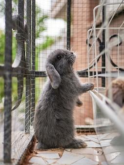 Grijs konijn dat op een balkon in de buurt van het kooihuisdierenzorgconcept staat