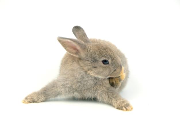 Grijs konijn geïsoleerd op wit