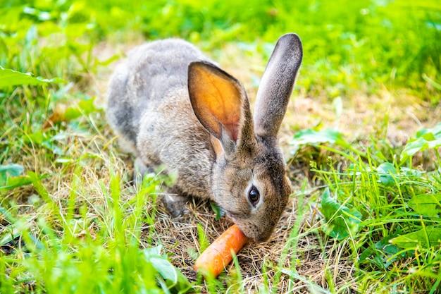 Grijs konijn in het gras in de weide