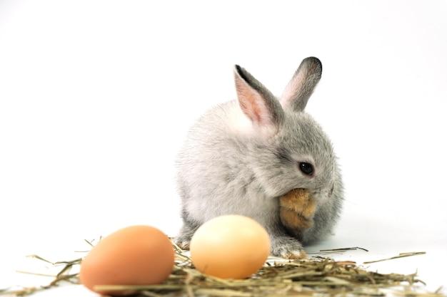 Grijs konijn met eieren geïsoleerd op wit