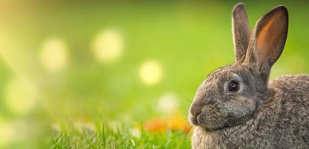 Grijs konijn op groen gras, selectieve aandacht. pasen concept.