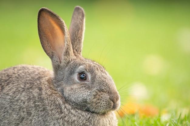 Grijs konijn op groen gras