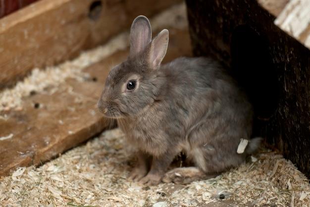 Grijs konijntje in een houten krat met houtsnippers