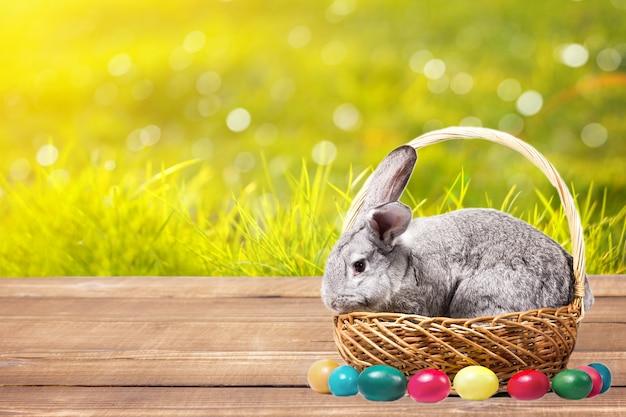 Grijs pasen-konijn in een mand met eieren op een houten lijst, geit met een konijn in openlucht
