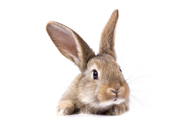 Grijs pluizig konijn die het uithangbord bekijken