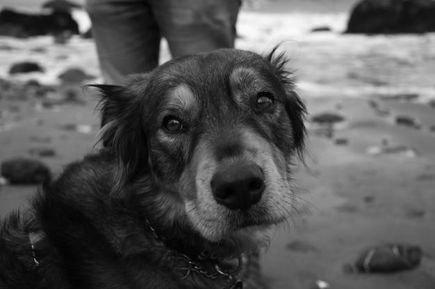 Grijswaardenopname van schattige puppy aan de kust van de zee