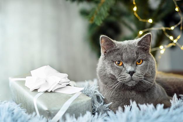 Grijze britse kat met kerstmisgiften op vakantiethema