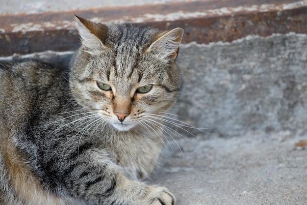 Grijze dakloze kat ligt buiten op de trap