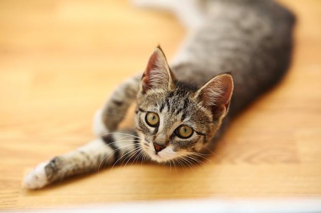 Grijze en witte kat ligt in een baclony op de vloer, witte muur