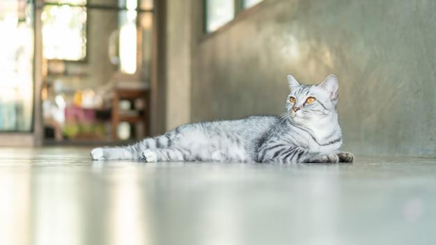 Grijze gestreepte kat die in de ruimte ligt.