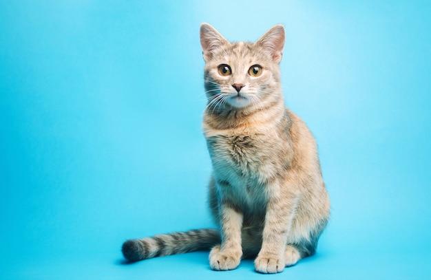 Grijze gestreepte kat