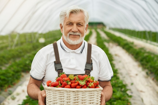 Grijze harige mannelijke boer in bruine overall die zich voordeed in de buitenkas en een mand met rijpe aardbeien vasthoudt. concept van mensen en oogsten.