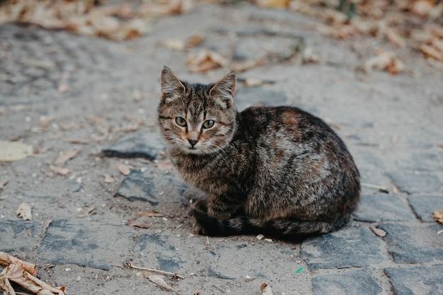 Grijze kat buiten