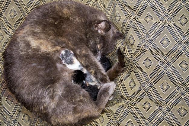 Grijze kat die haar pasgeboren kittens verzorgt
