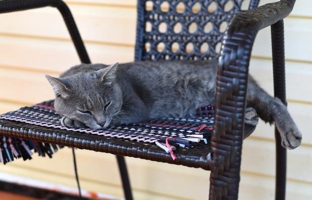 Grijze kat die op een stoel ligt en slaapt