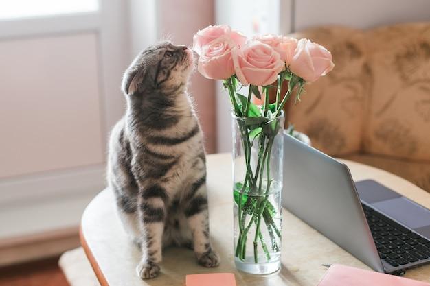 Grijze kat die roze rozen in glasvaas thuis snuift