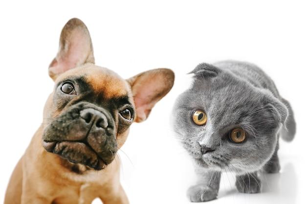 Grijze kat en hond met mooie ogen