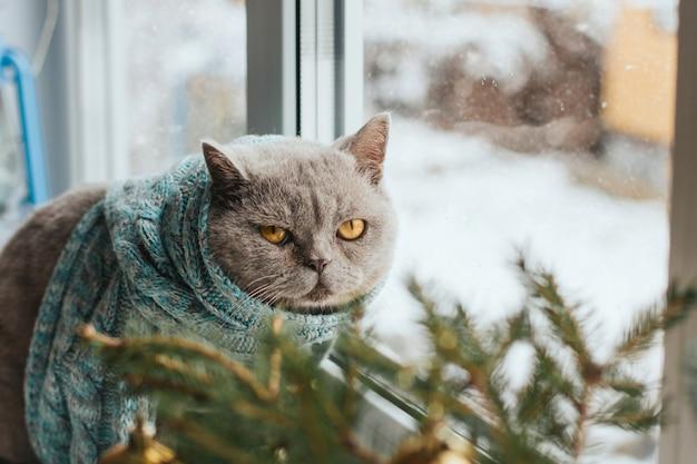 Grijze kat in een blauwe gebreide sjaal zit op een vensterbank