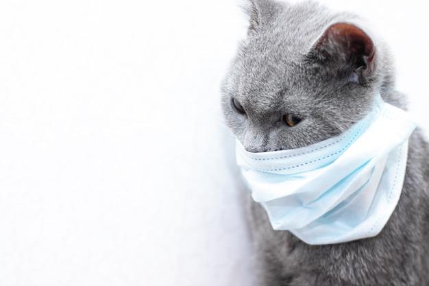 Grijze kat in een medisch masker. diergezondheid. coronavirus. coronavirusziekte bij katten en dieren. ademhalingsbescherming. geen coronavirus.
