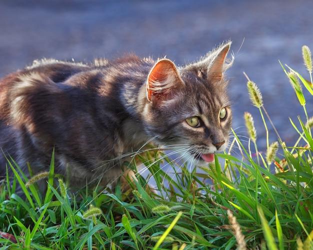 Grijze kat in het groene gras