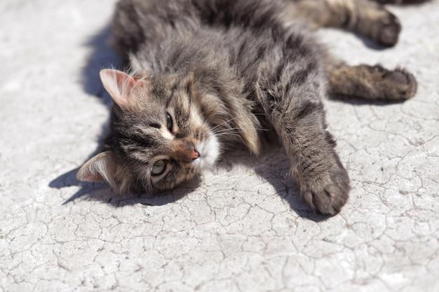 Grijze kat ligt op de weg