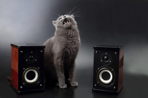 Grijze kat met open mond zingend met twee stereoluidsprekers