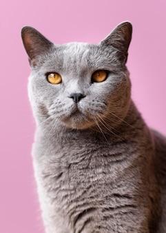 Grijze kat met zwart-wit muur achter haar