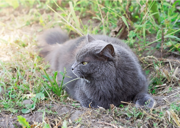 Grijze kat op gras