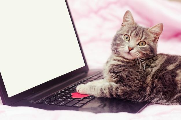 Grijze kat op laptop op een roze achtergrond