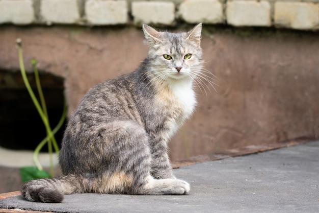 Grijze kat op straat