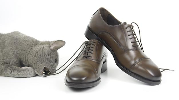 Grijze kat speelt met een klassieke bruine herenschoen van kant op een witte achtergrond. modieuze schoenen voor heren