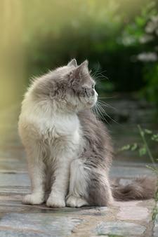 Grijze kat spelen in de tuin