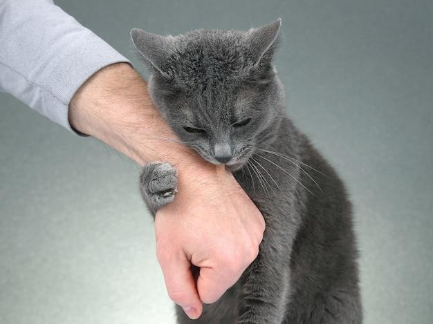 Grijze kat vouwde zijn poten in de hand van een man