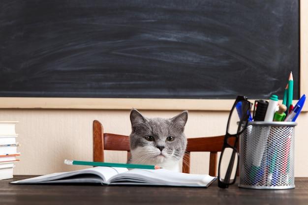 Grijze kat zit aan een tafel met boeken en notebooks, thuis studeren.