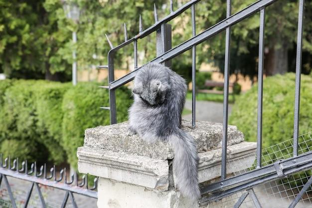 Grijze kat zit buiten. straatdieren in de stad.