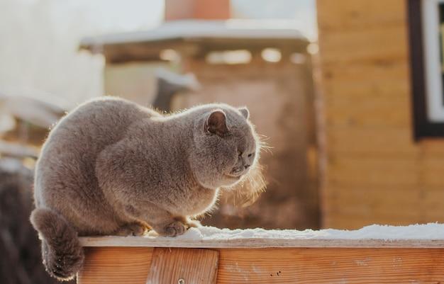 Grijze kat zit in de sneeuw in de winter en bevriest