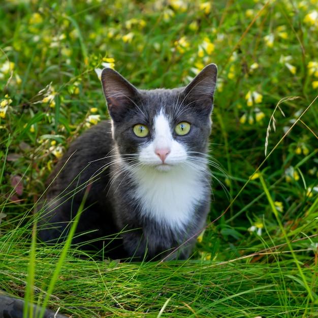 Grijze kat zit in het gras in de weide. detailopname.