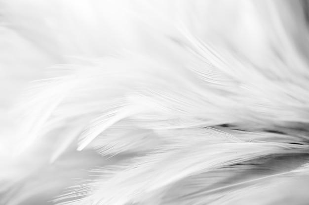 Grijze kippenveren in zachte en onscherpe stijl voor de achtergrond, zwart en wit