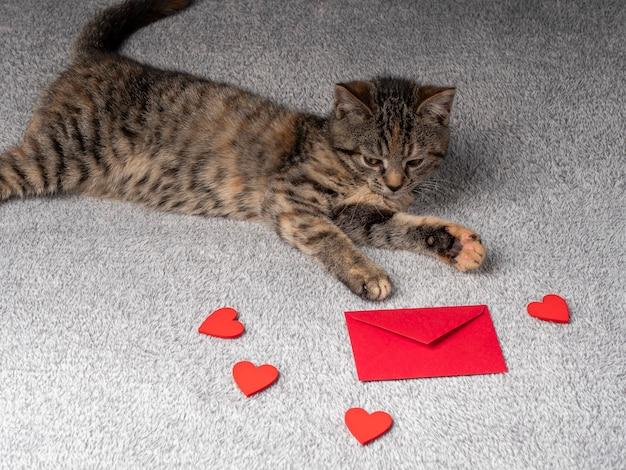 Grijze kitten ligt en kijkt naar de rode envelop