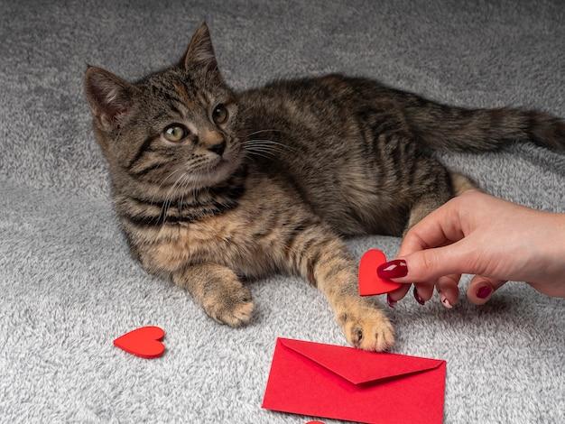 Grijze kitten ligt en speelt met een vrouwelijke hand, en ervoor een rode envelop