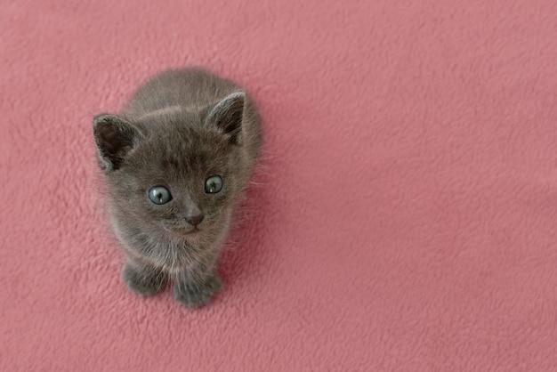 Grijze kitten met klauwen op een roze kussen