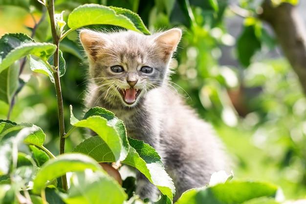 Grijze kitten op een boom onder groene bladeren. het kitten aan de boom schreeuwt van angst
