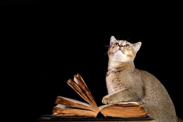 Grijze kitten schotse rechte chinchilla zit in de buurt van een open boek op een zwarte ondergrond, grappige snuit