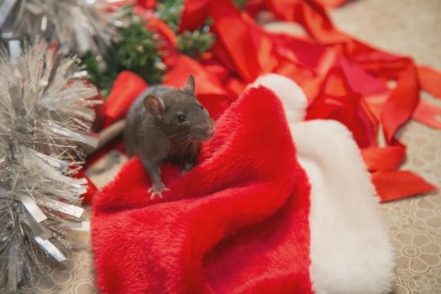 Grijze muis loopt tussen nieuwjaarsattributen. het dier maakt zich op voor kerstmis. de viering, kostuums, decoraties. symbool van het jaar 2020. jaar van de rat. rode inscriptie 2020