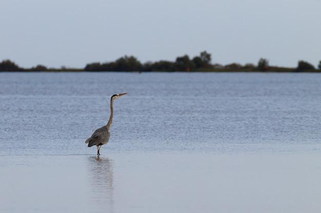 Grijze reiger binnen po rivier lagune minimaal natuurpanorama