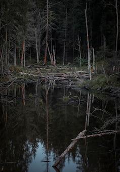 Grijze reiger in een moeras in een donker dicht eng noordelijk bos